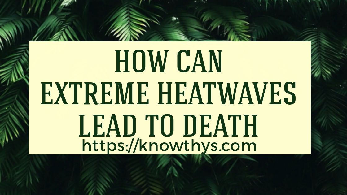 How Can Extreme Heatwaves Lead To Death 1